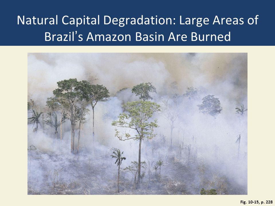 Natural Capital Degradation: Large Areas of Brazil's Amazon Basin Are Burned Fig. 10-15, p. 228