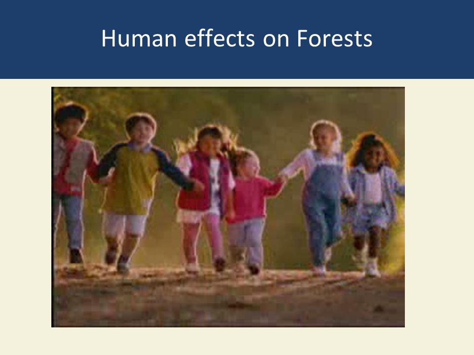 Human effects on Forests