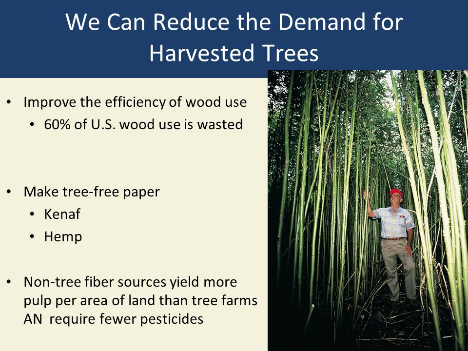 We Can Reduce the Demand for Harvested Trees Improve the efficiency of wood use 60% of U.S.