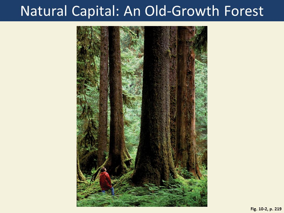 Natural Capital: An Old-Growth Forest Fig. 10-2, p. 219