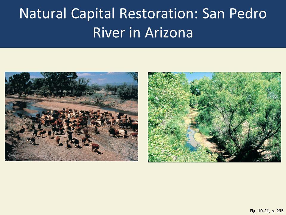 Natural Capital Restoration: San Pedro River in Arizona Fig. 10-21, p. 235