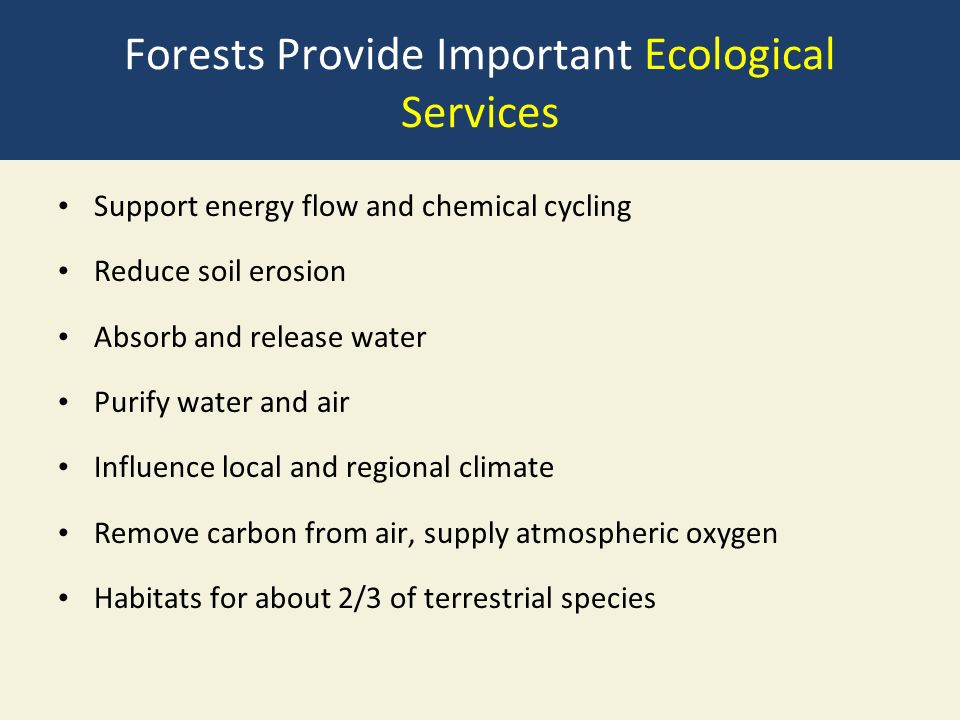 Forests Provide Important Ecological Services Support energy flow and chemical cycling Reduce soil erosion Absorb and release water Purify water and air Influence local and regional climate Remove carbon from air, supply atmospheric oxygen Habitats for about 2/3 of terrestrial species