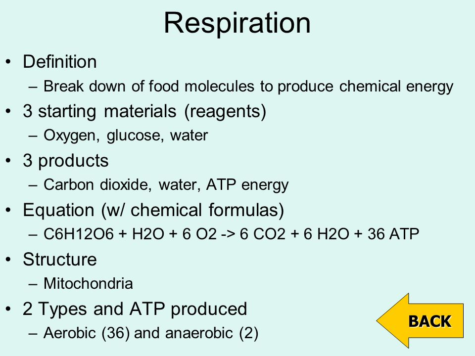 Respiration Definition –Break down of food molecules to produce chemical energy 3 starting materials (reagents) –Oxygen, glucose, water 3 products –Carbon dioxide, water, ATP energy Equation (w/ chemical formulas) –C6H12O6 + H2O + 6 O2 -> 6 CO2 + 6 H2O + 36 ATP Structure –Mitochondria 2 Types and ATP produced –Aerobic (36) and anaerobic (2) BACK
