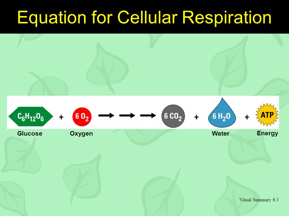 Visual Summary 6.3 GlucoseOxygenWater Energy Equation for Cellular Respiration