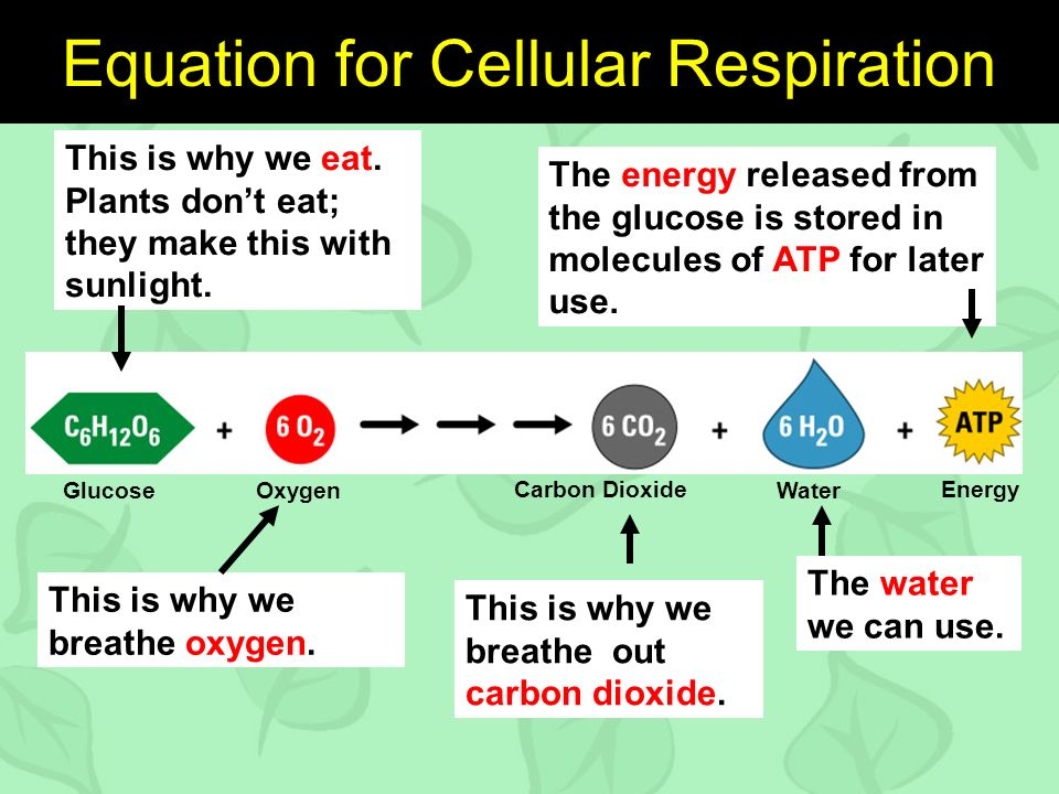 GlucoseOxygenWater Energy Equation for Cellular Respiration This is why we eat.