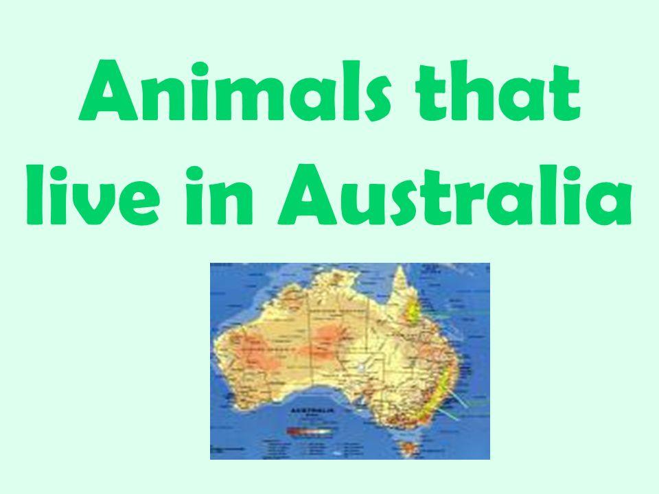 Animals that live in Australia