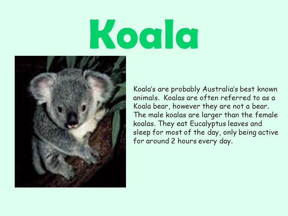 Koala Koala's are probably Australia's best known animals.