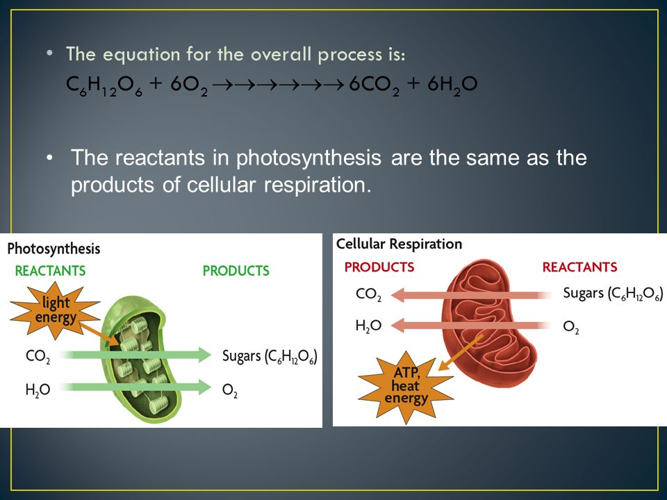 The equation for the overall process is: C 6 H 12 O 6 + 6O 2  6CO 2 + 6H 2 O The reactants in photosynthesis are the same as the products of cellular respiration.