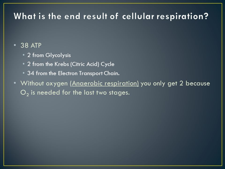 38 ATP 2 from Glycolysis 2 from the Krebs (Citric Acid) Cycle 34 from the Electron Transport Chain.