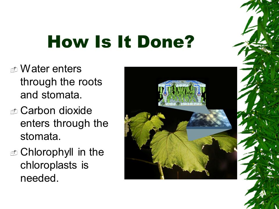 How Is It Done.  Water enters through the roots and stomata.