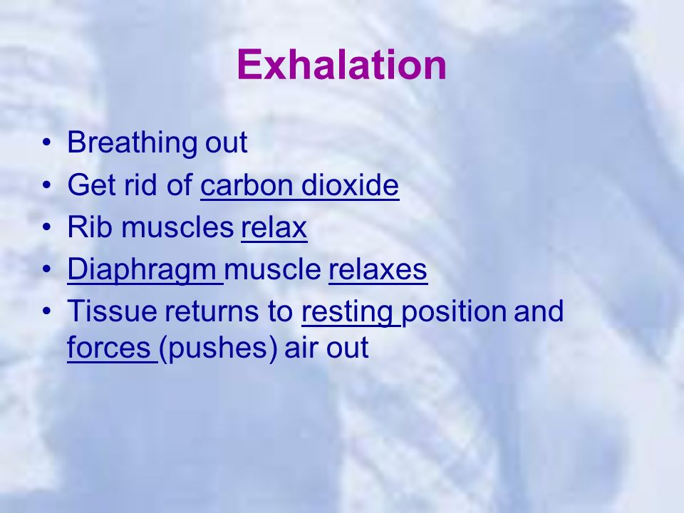 Exhalation Breathing out Get rid of carbon dioxide Rib muscles relax Diaphragm muscle relaxes Tissue returns to resting position and forces (pushes) air out