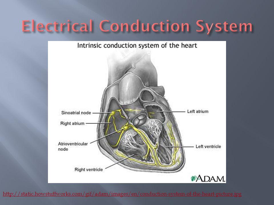 Contemporáneo Adam Anatomy And Physiology Inspiración - Imágenes de ...