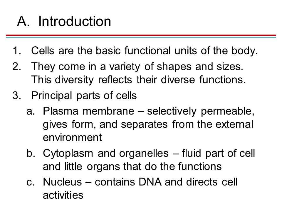 A.Introduction 1.Cells are the basic functional units of the body.