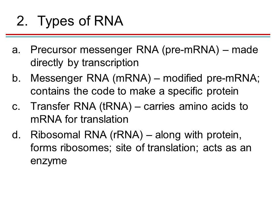 2.Types of RNA a.Precursor messenger RNA (pre-mRNA) – made directly by transcription b.Messenger RNA (mRNA) – modified pre-mRNA; contains the code to make a specific protein c.Transfer RNA (tRNA) – carries amino acids to mRNA for translation d.Ribosomal RNA (rRNA) – along with protein, forms ribosomes; site of translation; acts as an enzyme