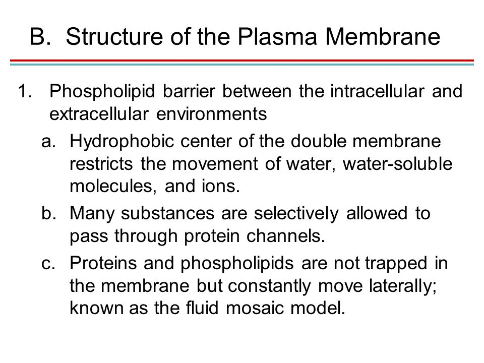 B.Structure of the Plasma Membrane 1.Phospholipid barrier between the intracellular and extracellular environments a.Hydrophobic center of the double membrane restricts the movement of water, water-soluble molecules, and ions.