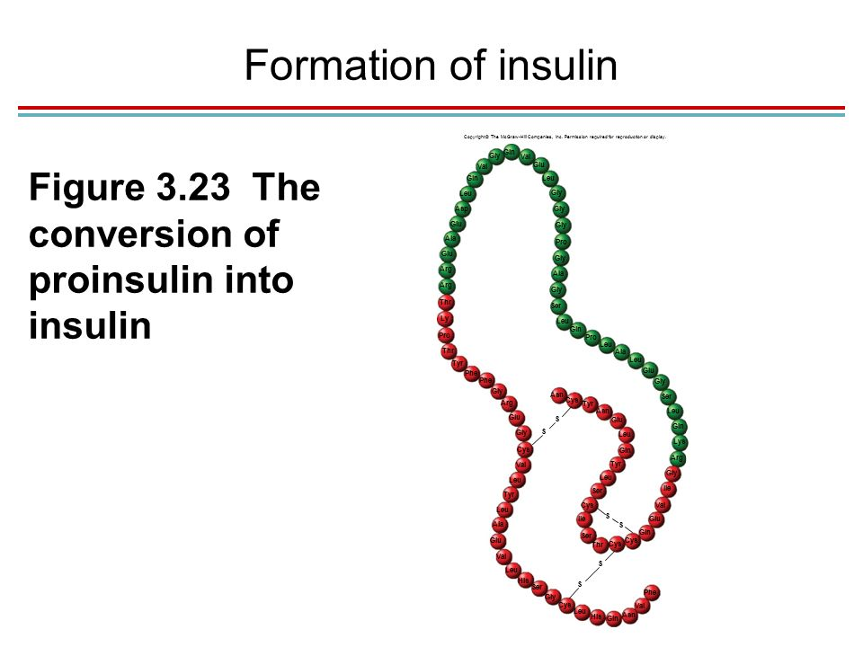 Formation of insulin Copyright © The McGraw-Hill Companies, Inc.