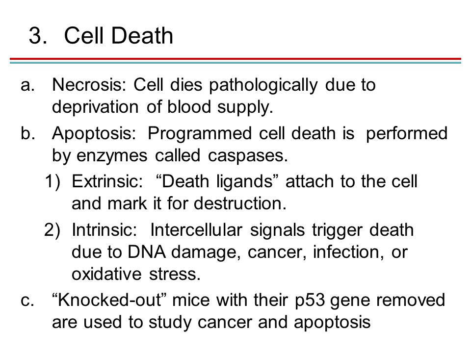 3.Cell Death a.Necrosis: Cell dies pathologically due to deprivation of blood supply.