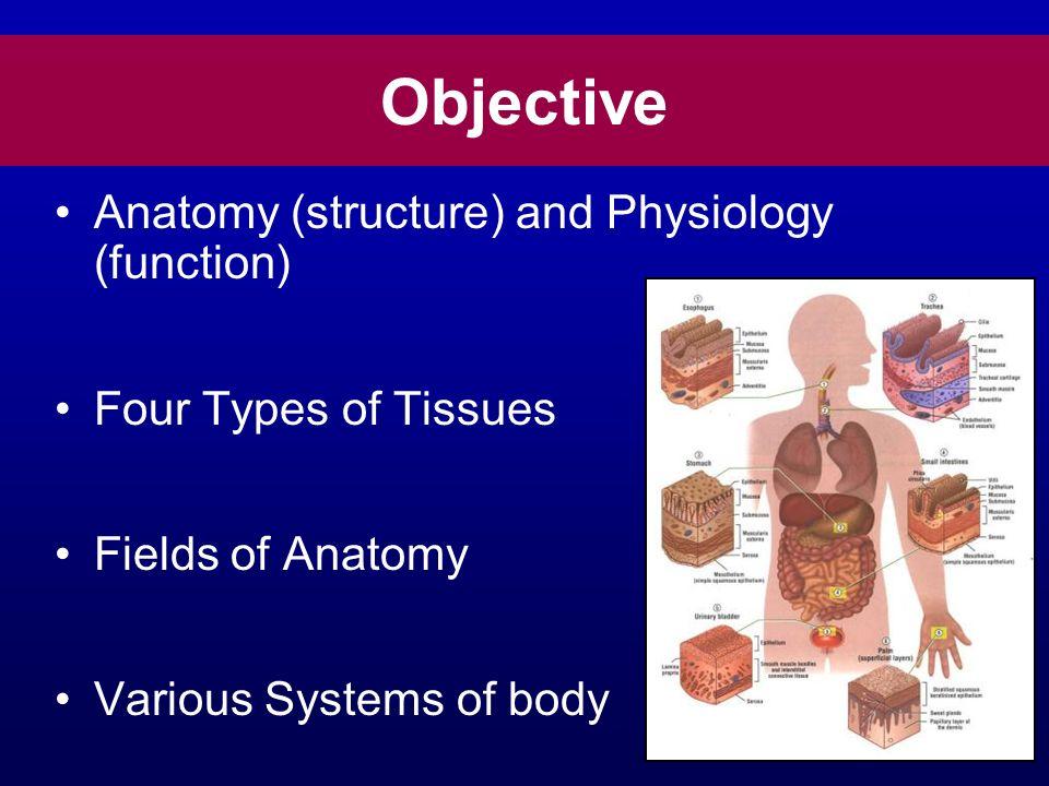Berühmt Anatomy And Physiology Slides Ideen - Menschliche Anatomie ...