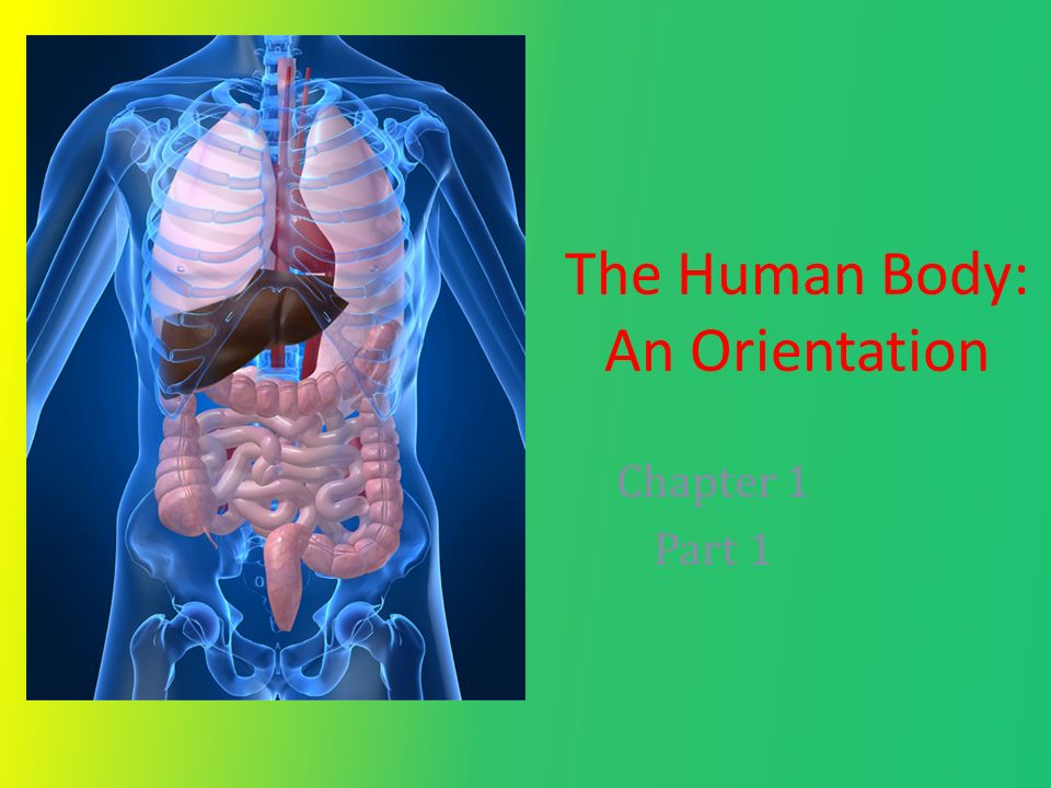 The Human Body: An Orientation Chapter 1 Part 1. Three essential ...