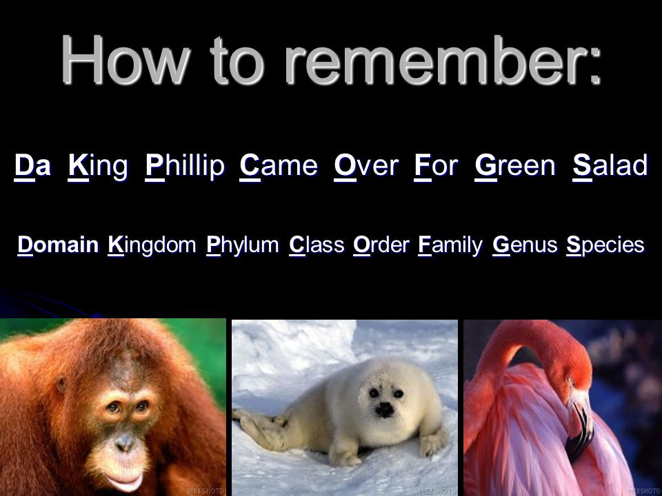 How to remember: Da King Phillip Came Over For Green Salad Domain Kingdom Phylum Class Order Family Genus Species