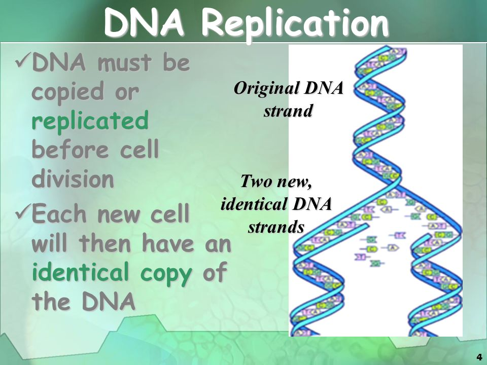1 Cellular Division. 2 Cell Division All cells are derived from ...