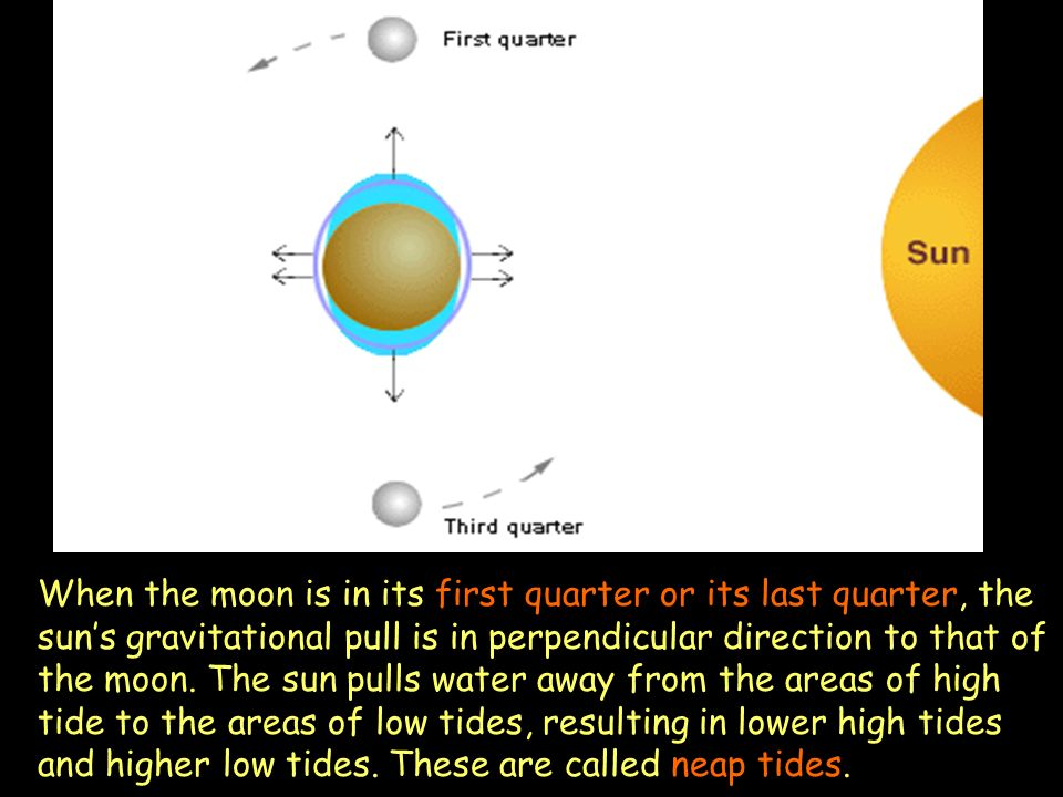 When the moon is in its first quarter or its last quarter, the sun's gravitational pull is in perpendicular direction to that of the moon.