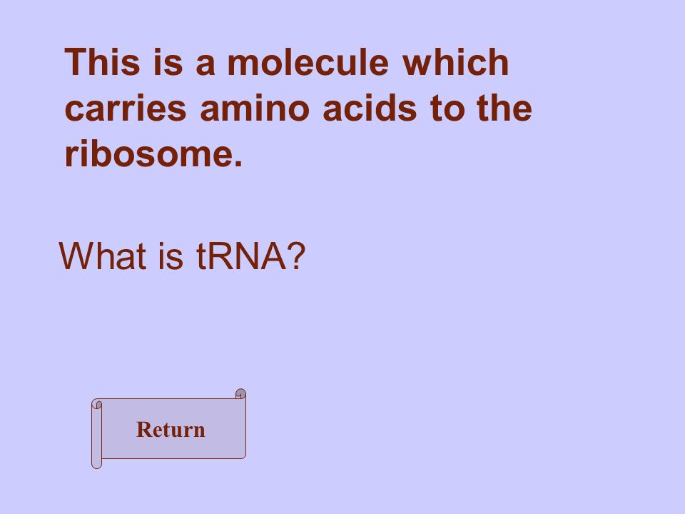 This is a molecule which carries amino acids to the ribosome. What is tRNA Return