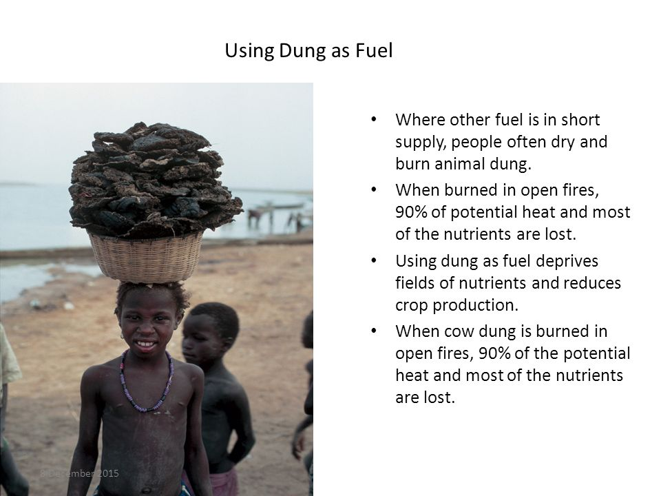 Using Dung as Fuel Where other fuel is in short supply, people often dry and burn animal dung.
