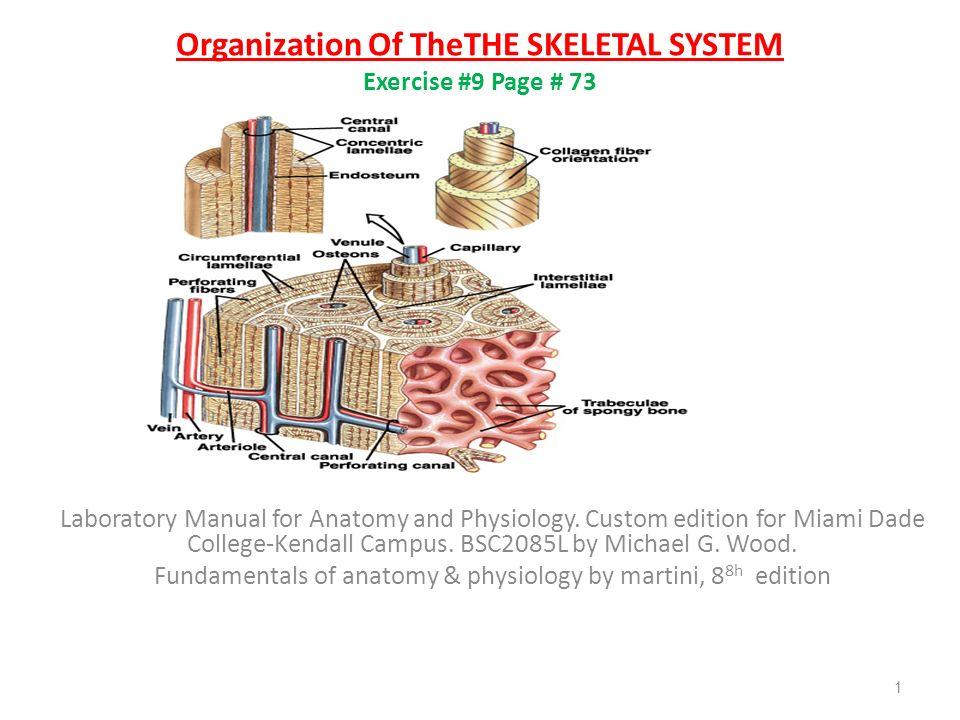 Großzügig Anatomy And Physiology Miami Dade College Zeitgenössisch ...