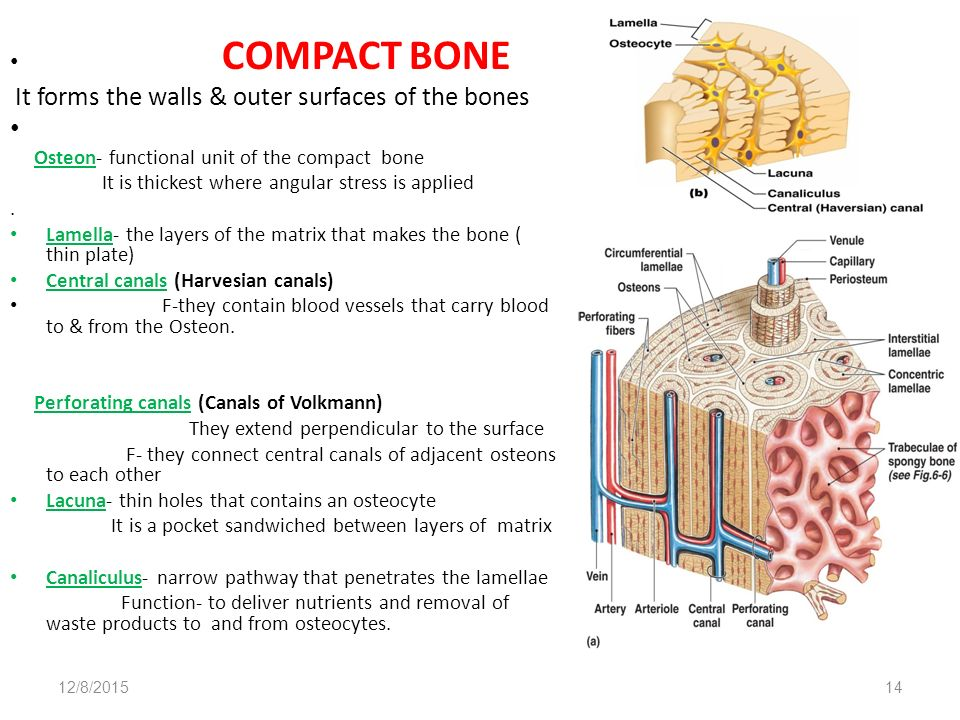 Organization Of Thethe Skeletal System Exercise 9 Page 73