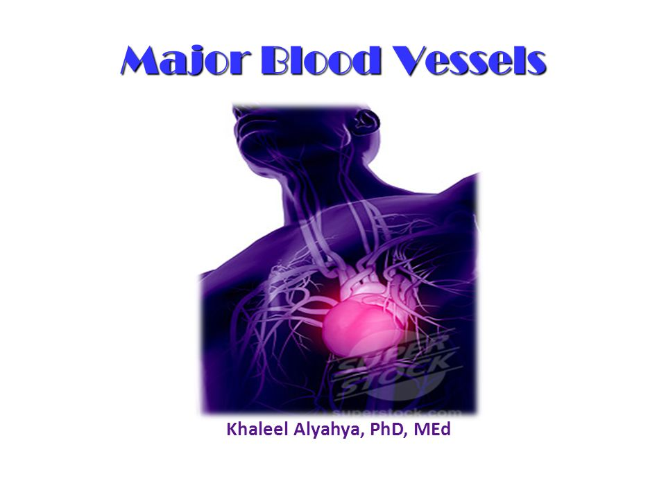 Major Blood Vessels Khaleel Alyahya, PhD, MEd