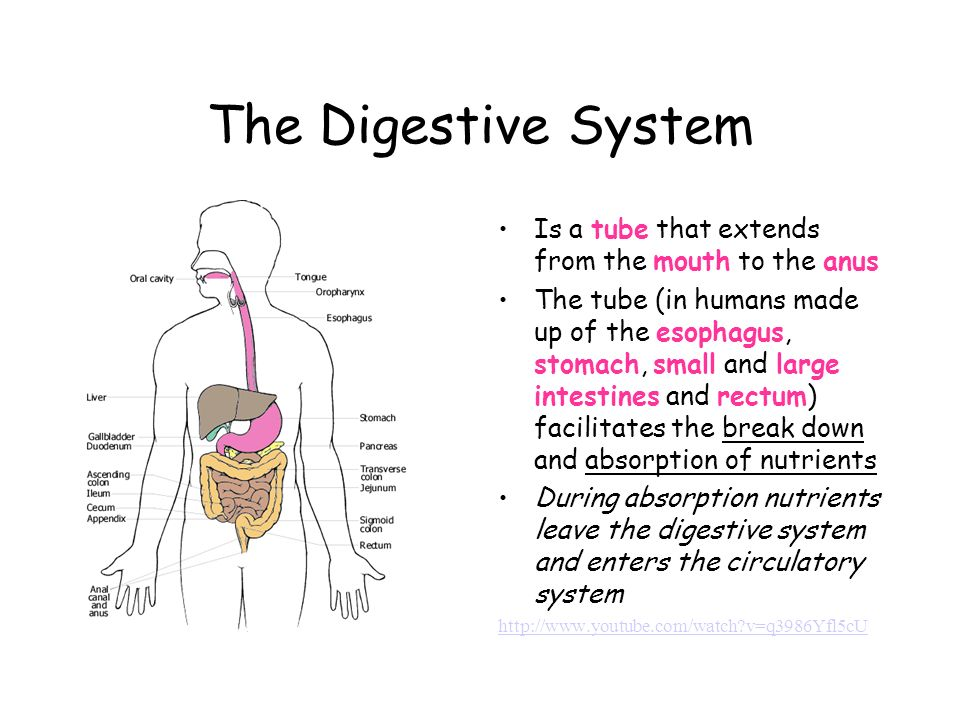 Organ Systems In Animals And Plants Animal Organ Systems Ppt Download