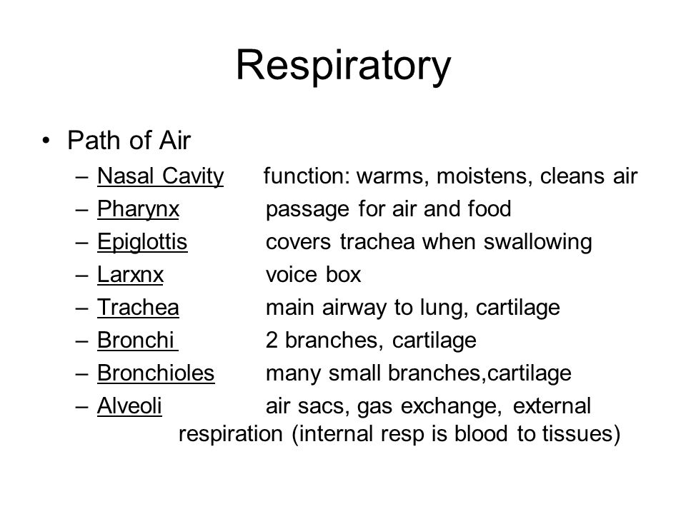 Transport Systems Respiratory, Digestive, Urinary. - ppt download