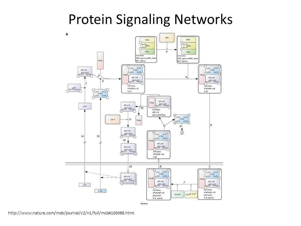 Types of cellular networks gene regulatory networks ppt download 4 protein signaling networks httpnaturemsbjournal v2n1fullmsb4100088ml publicscrutiny Image collections