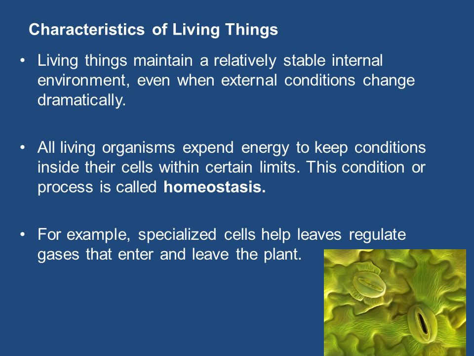 Characteristics of Living Things Living things maintain a relatively stable internal environment, even when external