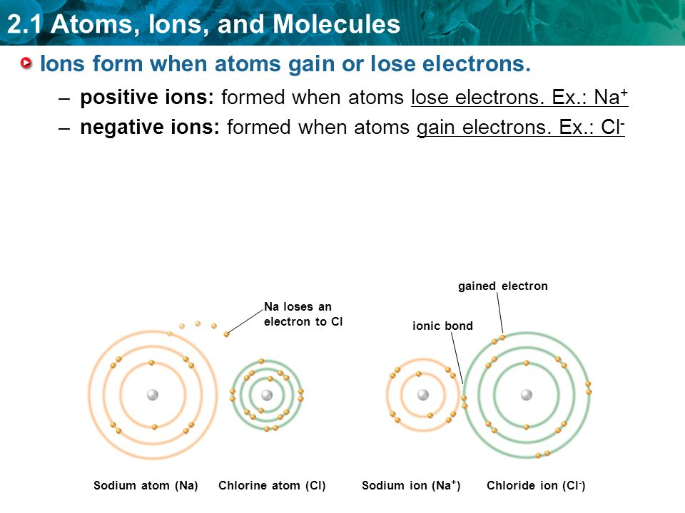2.1 Atoms, Ions, and Molecules KEY CONCEPT All living things are ...