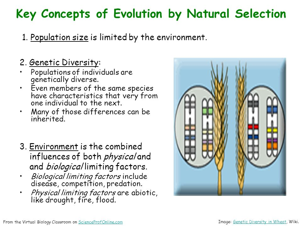 1.  Population size is limited by the environment.