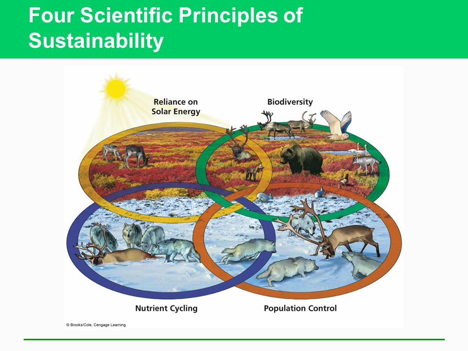 Four Scientific Principles of Sustainability