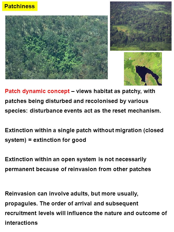 The Ecology Of Natural Disturbance And Patch Dynamics Ecology