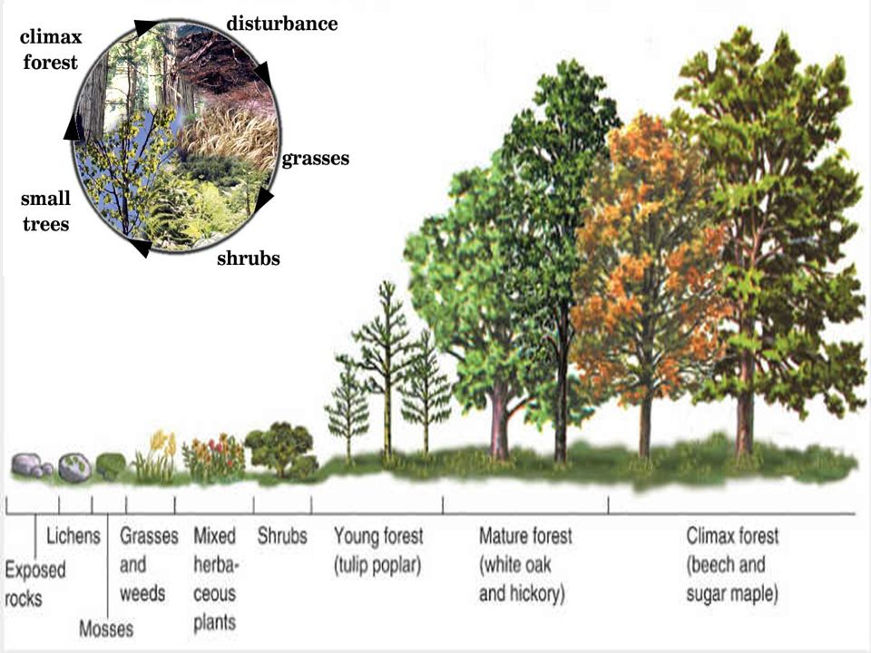 Ecological Succession Ecological Succession The Gradual Change Of