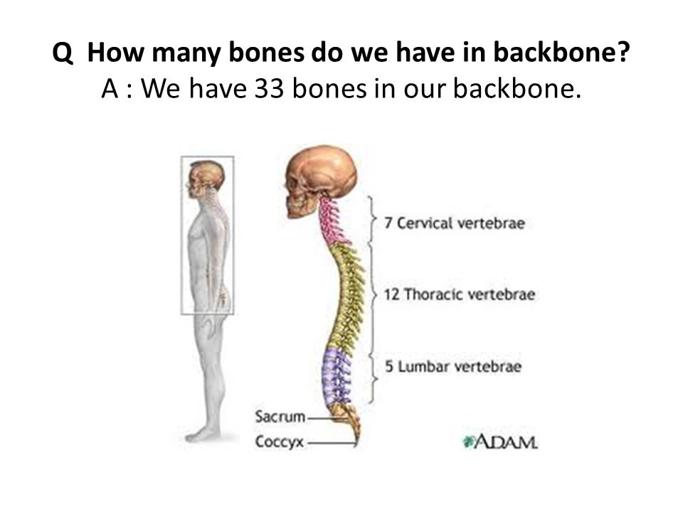 skeletal system. q what is a skeleton? a: all bones in our body, Human Body