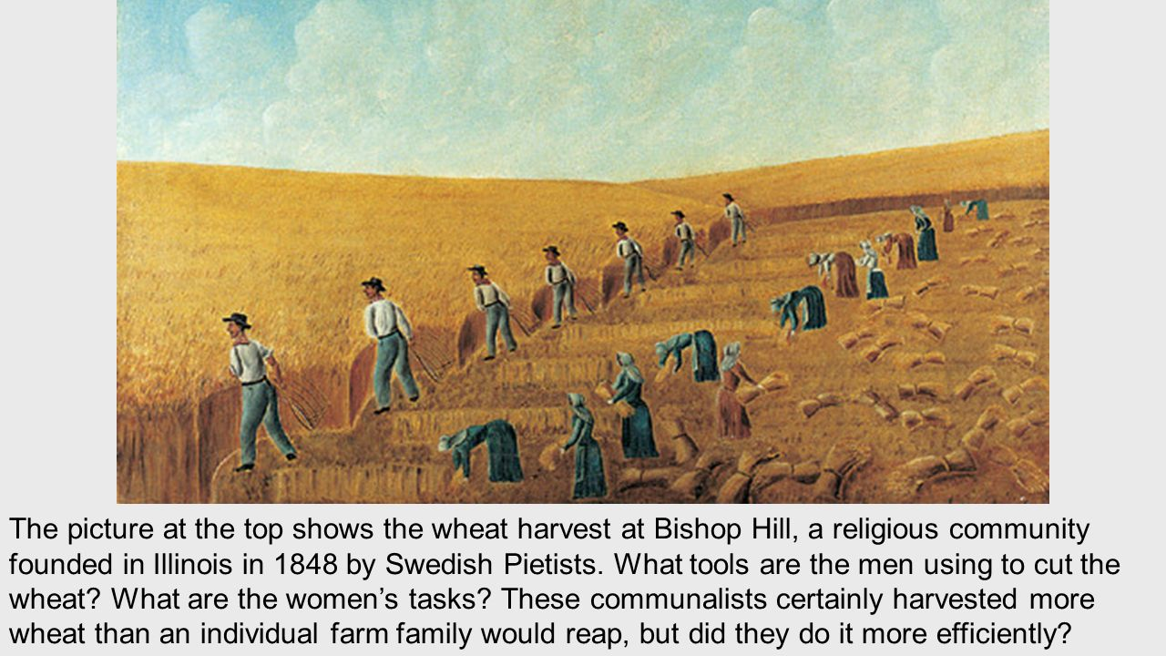 The picture at the top shows the wheat harvest at Bishop Hill, a religious community founded in Illinois in 1848 by Swedish Pietists.