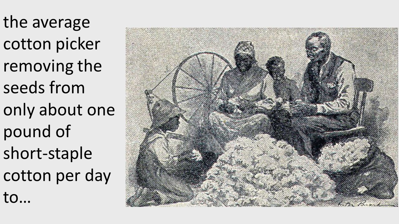 the average cotton picker removing the seeds from only about one pound of short-staple cotton per day to…