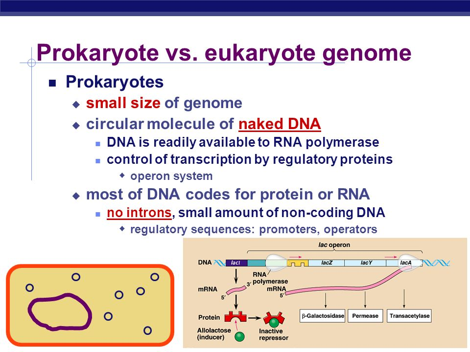 biology lesson plan eukaryotes and prokaryotes