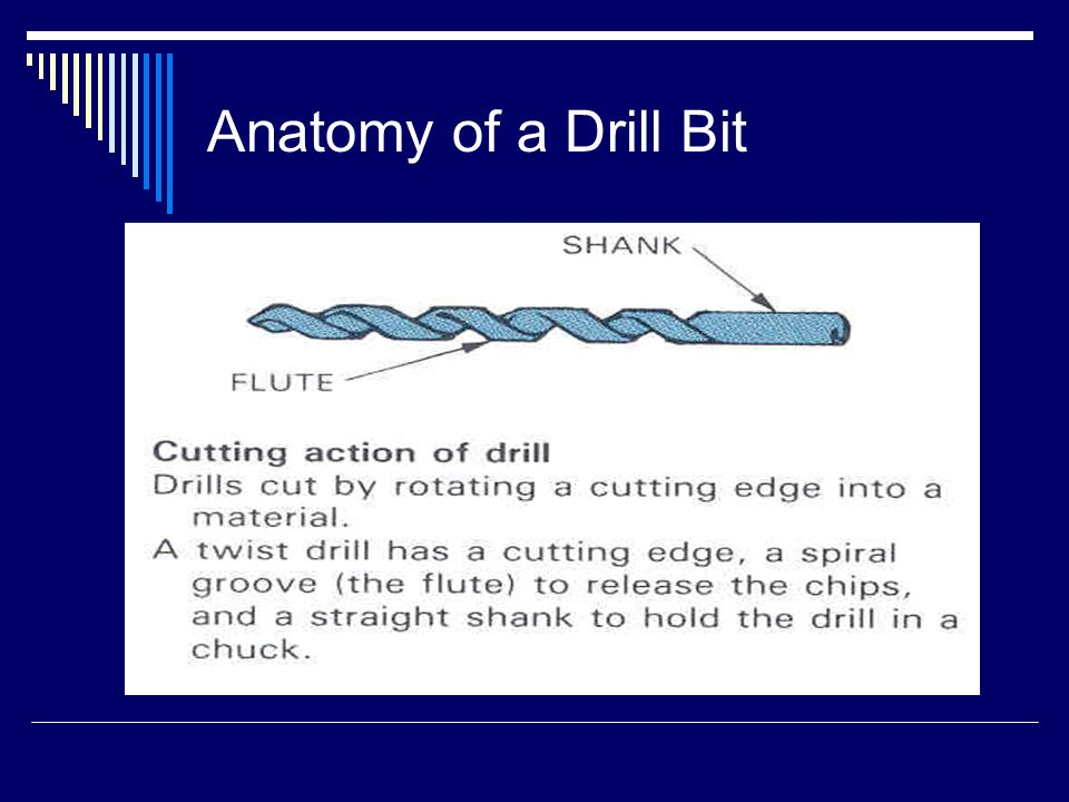 Attractive Drill Bit Anatomy Images - Anatomy And Physiology Biology ...