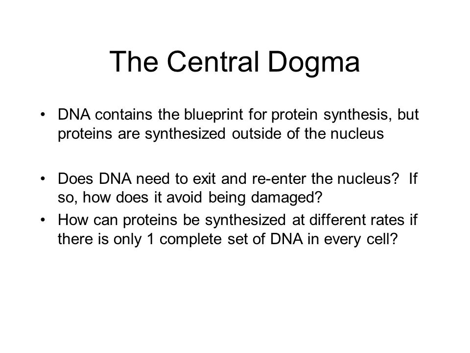 Molecular genetics protein synthesis overview the central dogma dna the central dogma dna contains the blueprint for protein synthesis but proteins are synthesized outside malvernweather Choice Image