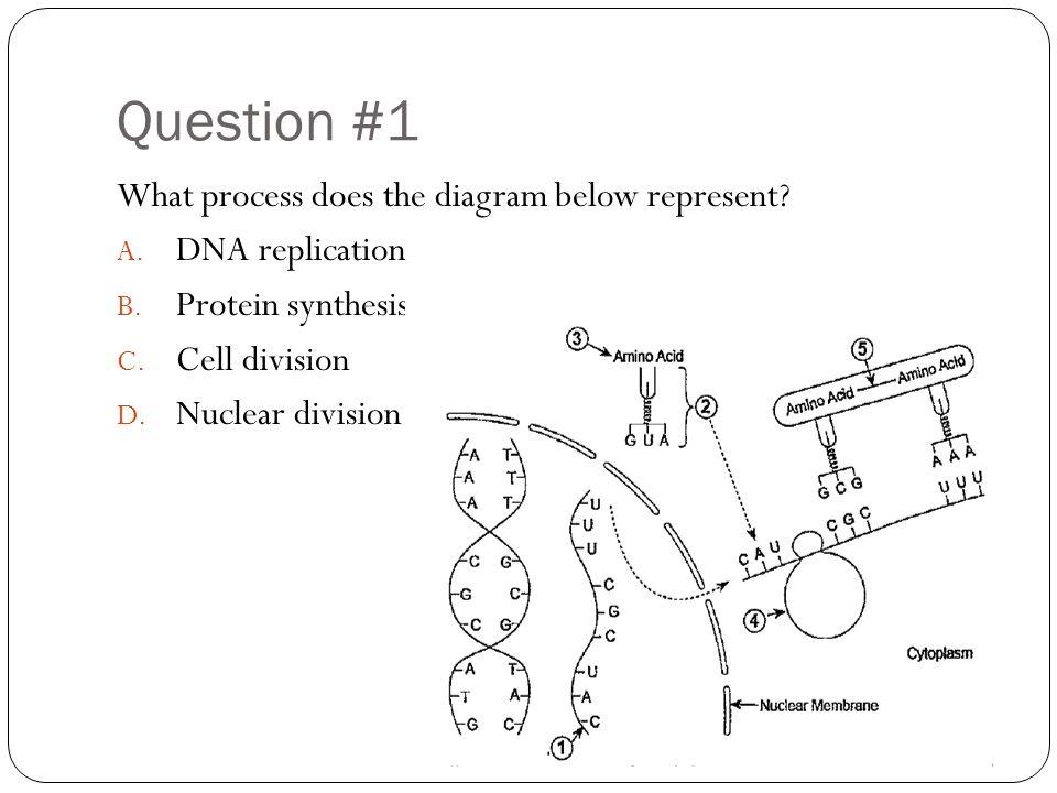 Unit 4 test review question 1 what process does the diagram below question 1 what process does the diagram below represent ccuart Choice Image
