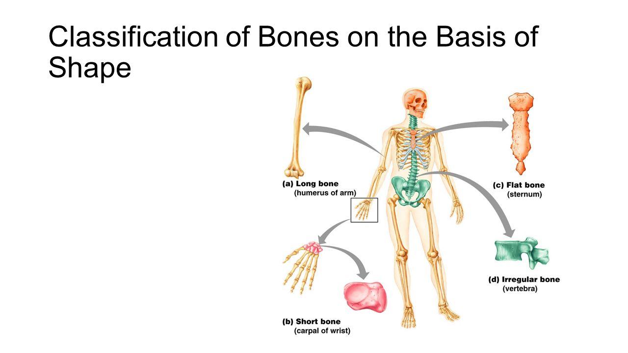 Workbooks » Anatomy And Physiology Coloring Workbook Answer Key ...