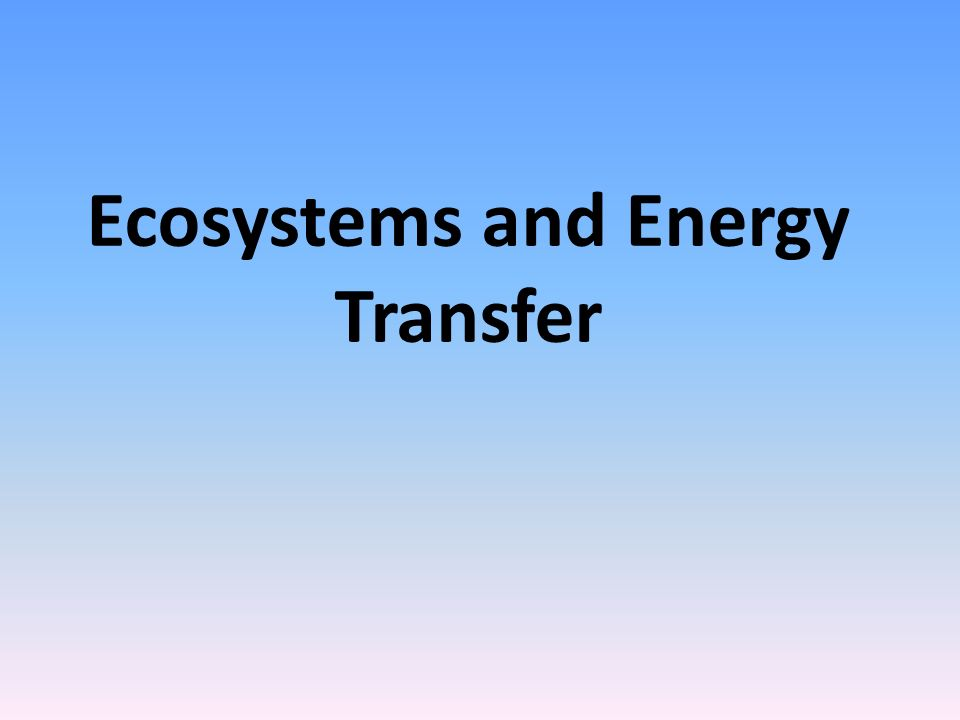Ecosystems and Energy Transfer
