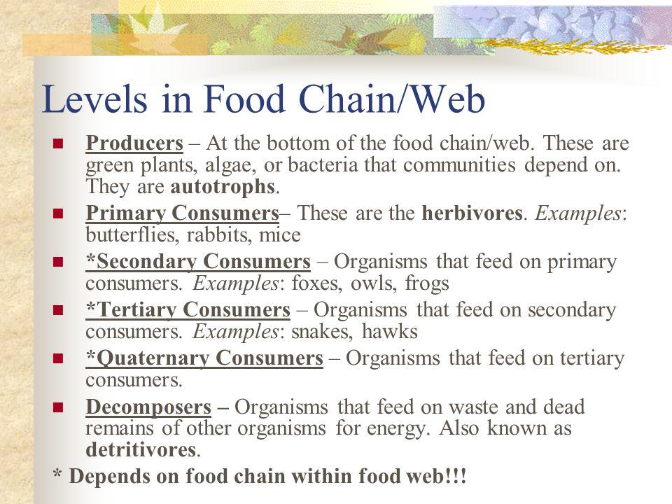 Food ChainsWebs Investigative Science Basha High School ppt – Food Web Worksheet High School